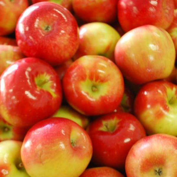 Do apples need to be refrigerated?